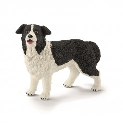 BORDER COLLIE 16840