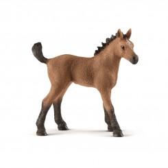 QUARTER HORSE FOAL 13854